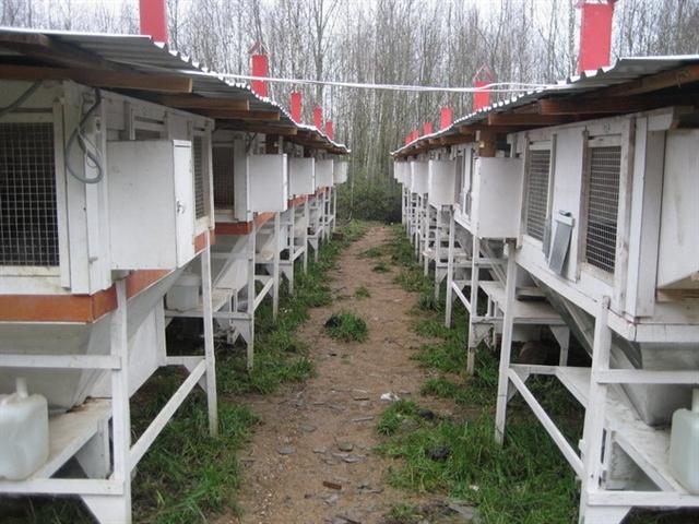 Кроликов. мини-ферма для кроликов