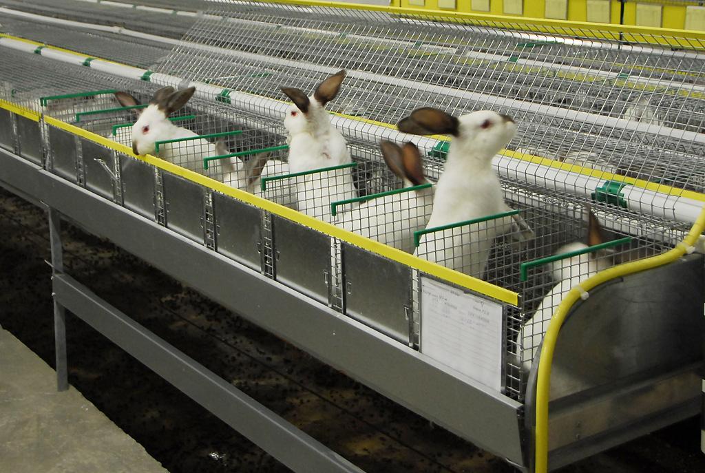 Как сделать ферму кроликов