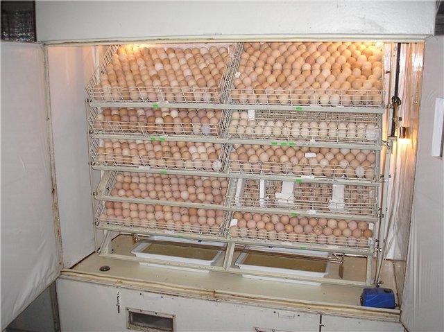 841 Правила інкубації гусячих яєць