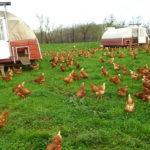 2410 Куряча ферма