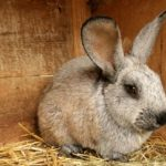 2658 Де купити комбікорм для кролів