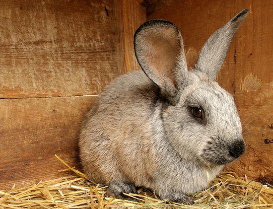 Де купити комбікорм для кролів