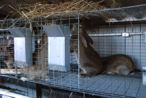 2662 Опалення шедів для кроликів