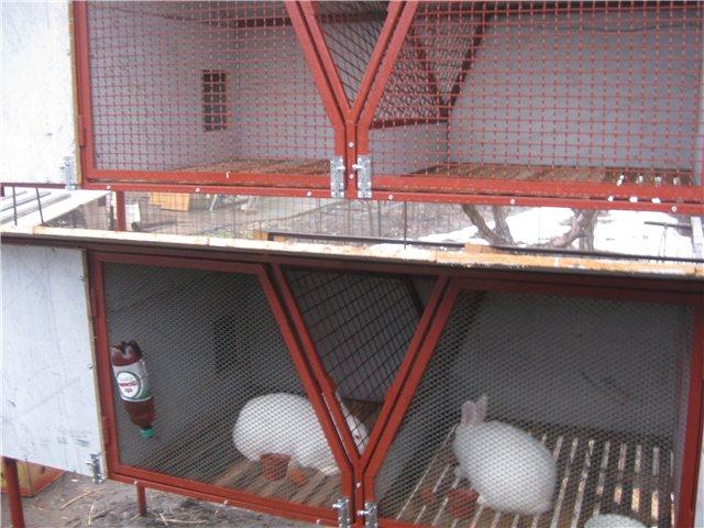 Освітлення шедів для кроликів
