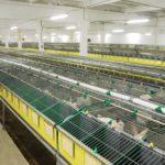 2961 Навозовидалення і вентиляція на кроліководческих фермах