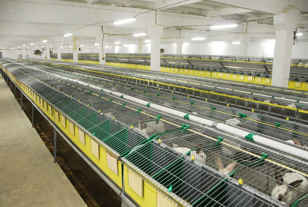 Навозовидалення і вентиляція на кроліководческих фермах