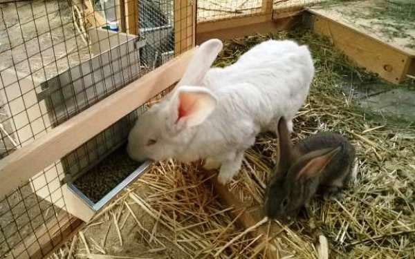 Як правильно влаштувати годівниці для кроликів