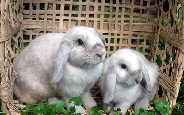 Годування кролика