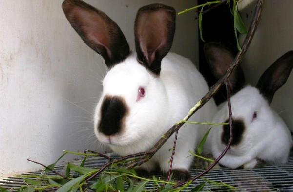 Заготівля кормів для кроликів