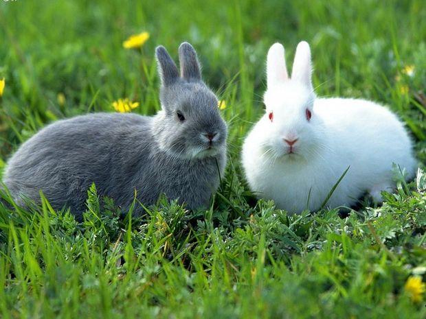 3551 Способи парування кролів