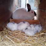 3553 Пологи у кролиці