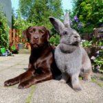 3713 Породи кролів велетнів