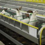 3722 Нові технології в змісті кроликів