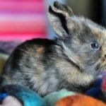3913 Популярні породи кролів: ангорський кролик