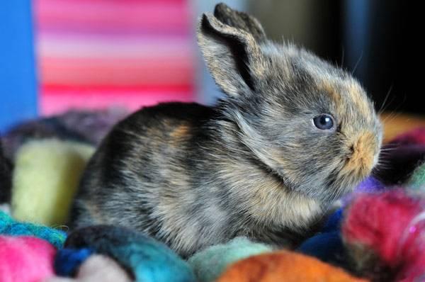 Популярні породи кролів: ангорський кролик