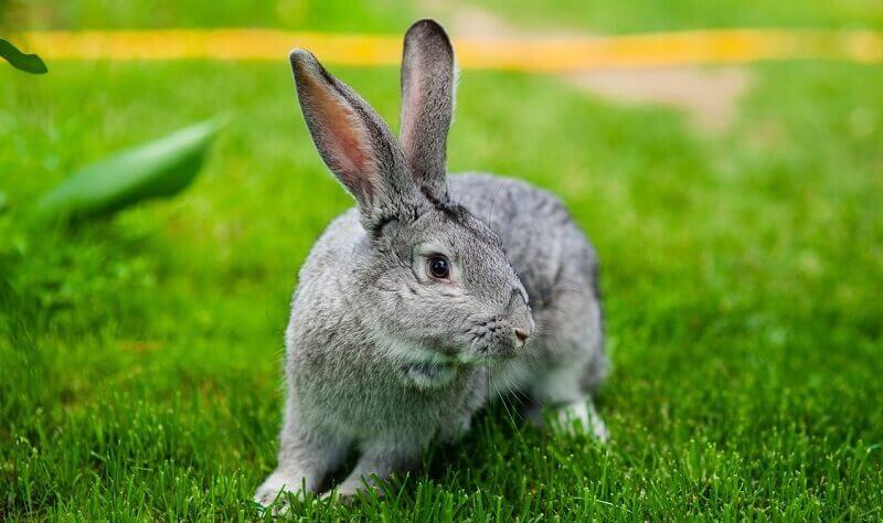 4074 Домашнє середовище проживання кроликів