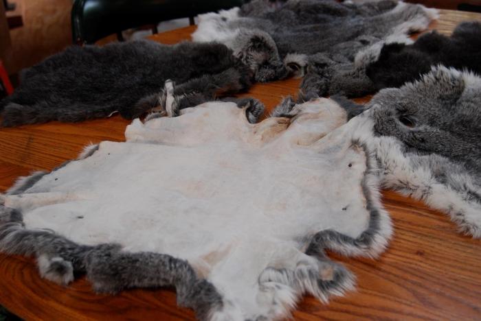 4281 Забій кроликів і знімання шкурки