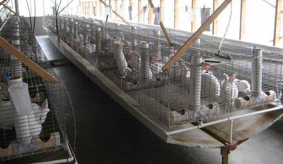 Фермы для кролиководства под ключ и стоимость