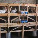 4286 Технології розведення кроликів