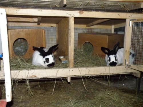 Технології розведення кроликів