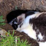 4515 Вирощування кролів в ямі