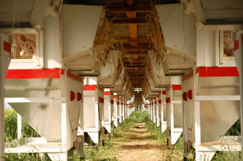 Клітки для кроликів-акселератів — міні-ферми