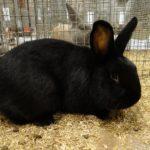 4616 Кролики - акселерати