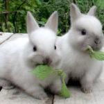4618 Чим годувати кроликів