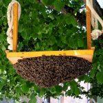 8426 Коли і як розширювати гніздо бджіл