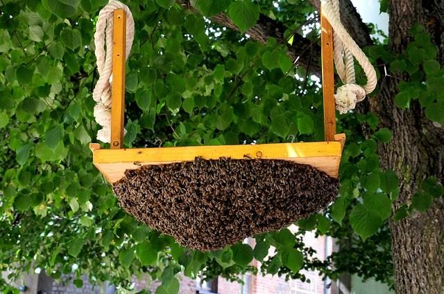 Коли і як розширювати гніздо бджіл