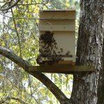 8440 Норми бджільництва: правила і закони змісту бджіл