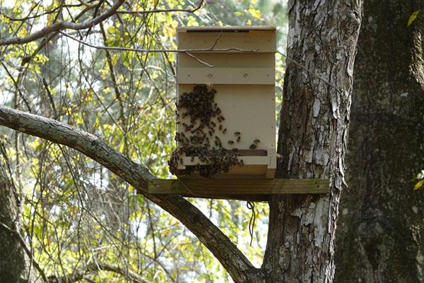 Норми бджільництва: правила і закони змісту бджіл