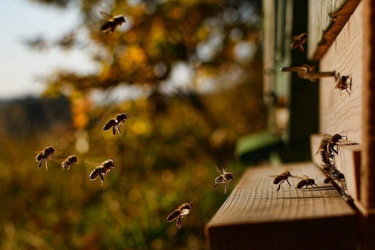 Як припинити роїння бджіл: протиройові методи в бджільництві