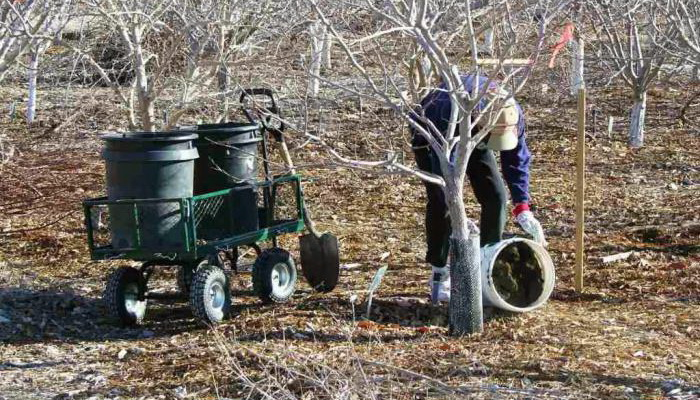 Чим і скільки разів годувати сад