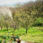 8723 Як удобрювати плодовий сад