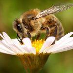 8734 Алергія на укуси бджіл і користь отрути для людини