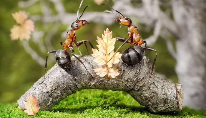 Як позбутися від мурашок на яблуні: ефективні засоби