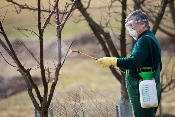 Весняна обробка плодового саду від шкідників