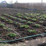 8913 Березневе підживлення ґрунту ділянки, садові та городні роботи, розсада