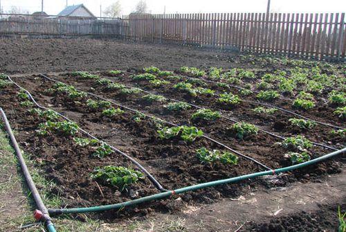 Березневе підживлення ґрунту ділянки, садові та городні роботи, розсада