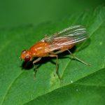 8946 Як позбутися морквяної мухи