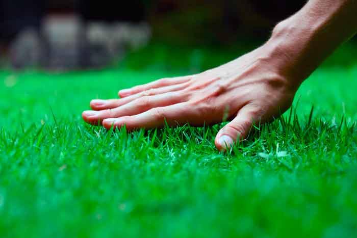 8977 Добриво для газону: чим підгодувати траву