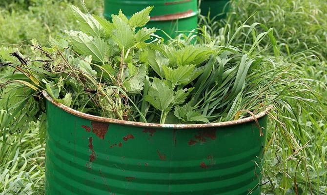 Добриво з трави як зробити зелену підгодівлю