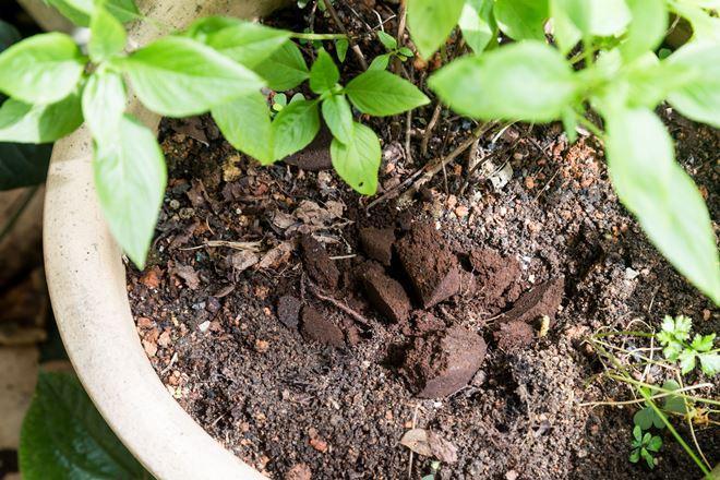 Кавова гуща як добриво для рослин – як використовувати