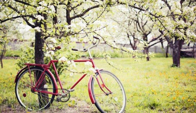 9311 Чим підгодувати яблуню – схема підгодівлі яблук