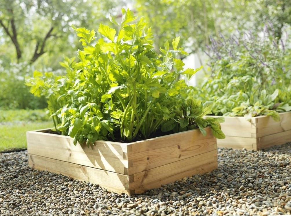 9358 Бадилля рослин як добриво – як застосовувати на грунті, користь і властивості