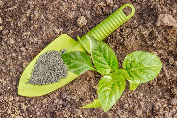 9585 Кальцієва селітра застосування добрива на городі