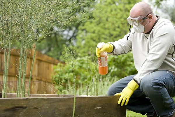 Мідний купорос як застосовувати в садівництві, обробка рослин навесні і восени