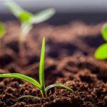 9664 Органічні добрива для ґрунту внесення, види