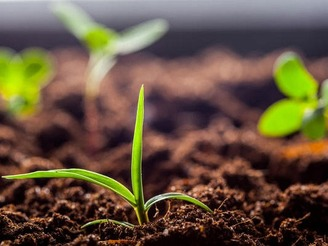 Органічні добрива для ґрунту внесення, види